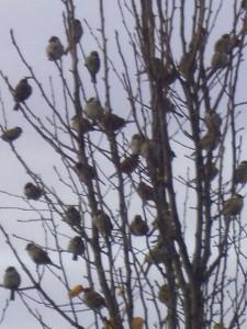 sparrow-tree-7
