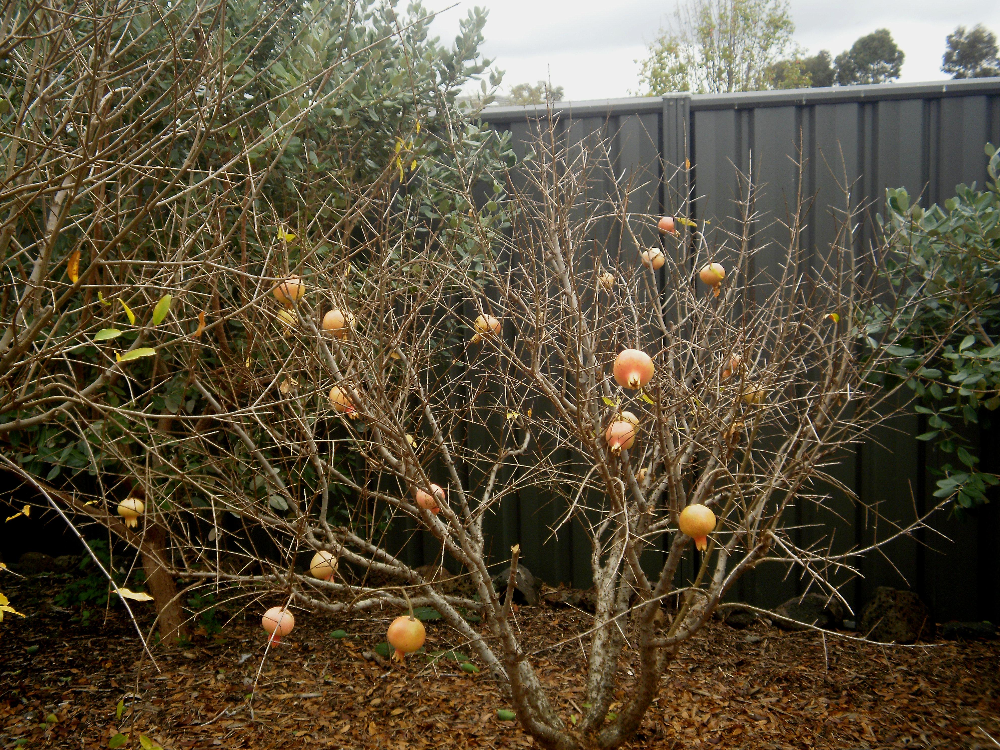 winter garden anne frandi coory